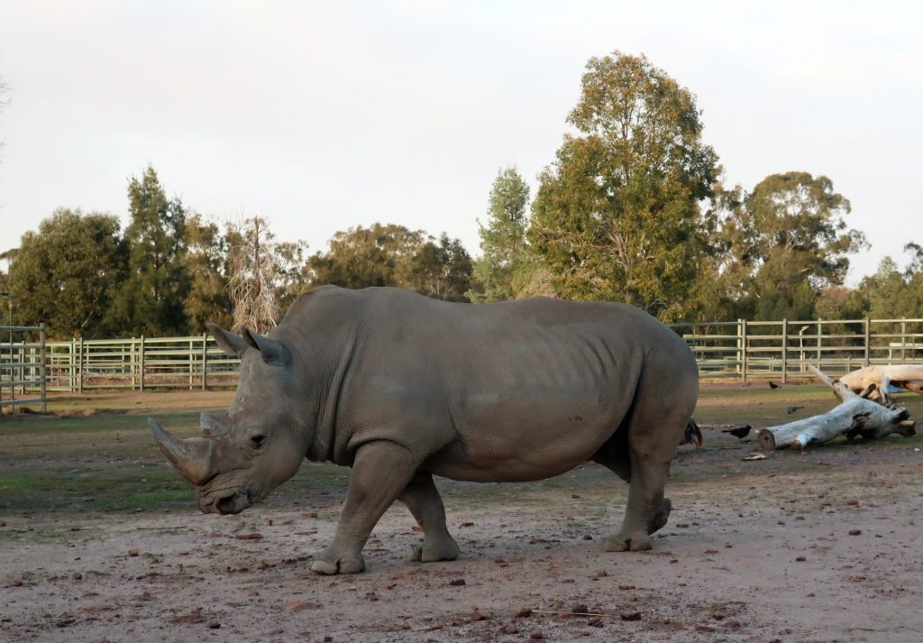 Armchair Travel: Zoo Live Streams From Around The World